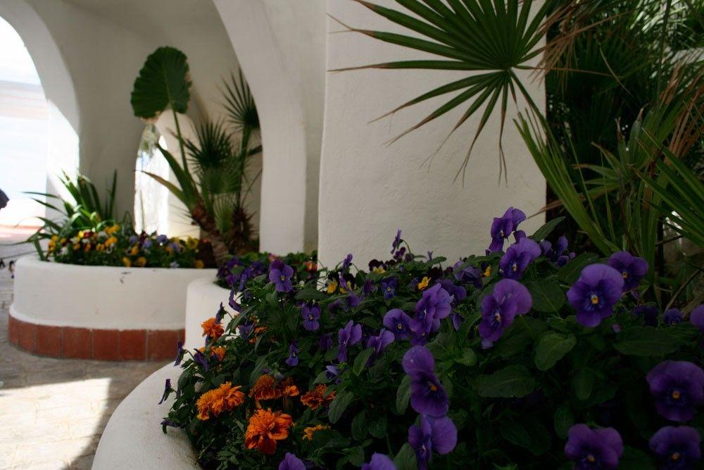 elianto_residence_anzio_hotel_appartamenti_vacance_mare_oleandro_esterno_9